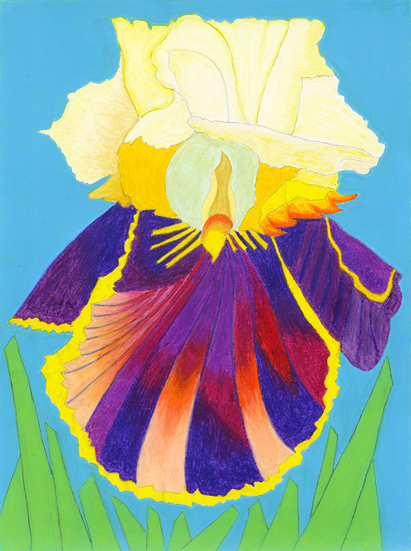 Rendering of a scallop shell shaped iris.
